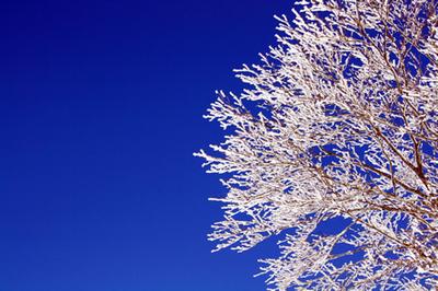 skiarea01.jpg
