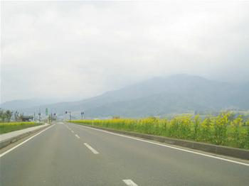 nanohana0425-4.jpg